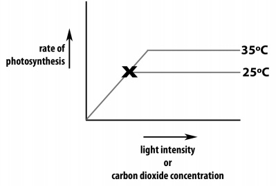 1384_rate of photosynthesis.jpg
