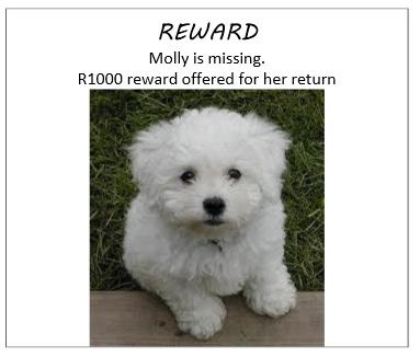 1527_Reward.jpg