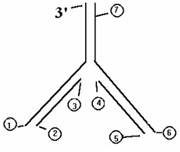 1913_RNA.jpg