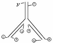 1917_RNA_1.jpg