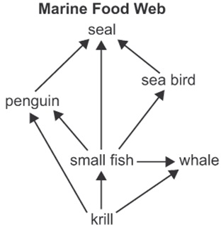 2327_marine food web.jpg